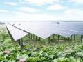 湖北省最大单体光伏农业旅游项目仙桃开工