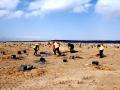 青海黄河水电115兆光伏发电项目全面铺开